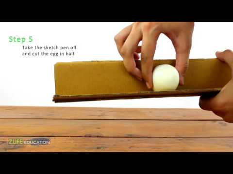 Heart, Cube Shapes of eggs  - Cool Science Activity for Kids and adults to do at Home