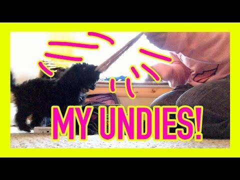 Puppy stole my undies!