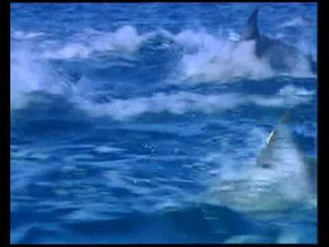 Delfines relajacion con ondas binaurales