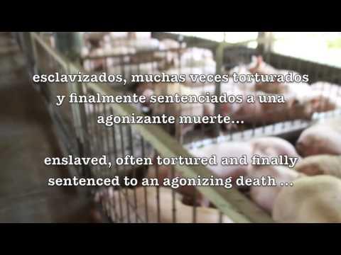 Granja de cerdos / Pigs farm. Cancun, Mexico