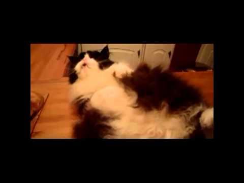 Os gatos mais engraçados da internet 2013