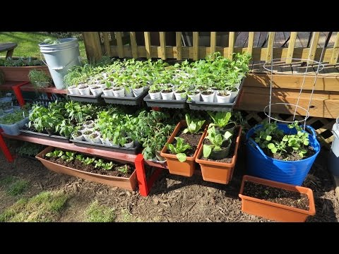 My First Container Garden: Shelving & Container Set- Up, Making Soil, Planting & Fertilizing