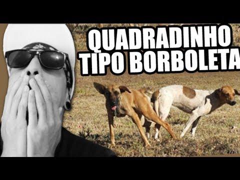 BONDE DAS MARAVILHAS - QUADRADINHO DE BORBOLETA (O RETORNO DO CÃO!)