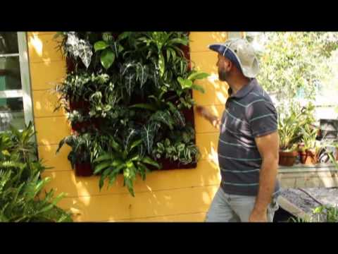 Introduction to vertical gardening - wall units