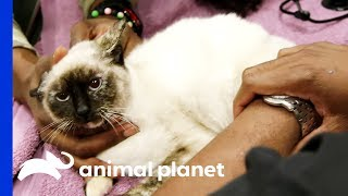 Cat vs. Car: Hemi's Heartwarming Story - ANIMALPLANETTV