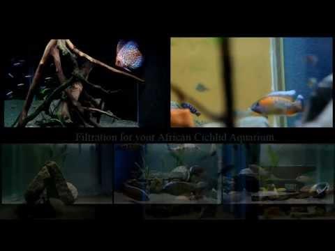 Filtering your African Cichlid Aquarium
