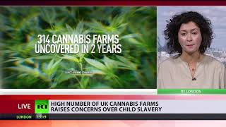Child slaves exploited at hundreds of cannabis farms across London - RUSSIATODAY