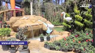 بالفيديو والصور.. معرض زهور الربيع يضم أفضل أنواع الورود وأشجار النخيل
