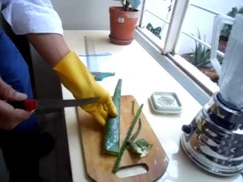 Aloe Vera 2-¿Cómo preparar el jugo de sábila?