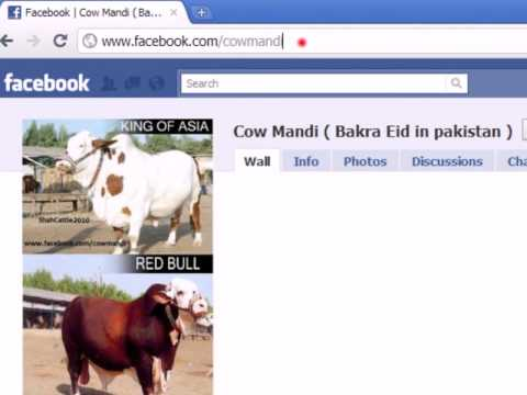 how to join  cow mandi (bakra eid in pakistan) fan page on facebook  tutorial