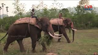 Elephant Hulchul in Vizianagaram District | CVR News - CVRNEWSOFFICIAL