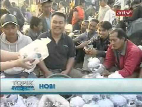 TOPIK ANTV Pusat Perdagangan Ikan Hias Parung