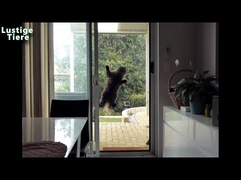 Śmieszne koty 2014 HD