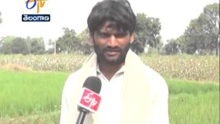 Dry Crop Taking The Lives Of Farmers In Telangana - ETV2INDIA
