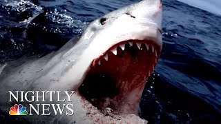 Scares Prompt Beach Closures, What Are The Facts On This Widely Feared Fish? | NBC Nightly News - NBCNEWS