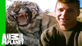 Tigers Make Their First Kill And Prepare For Life In Africa | Living With Tigers - ANIMALPLANETTV