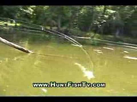 Fishing Mississippi River Backwater Bass Fishing