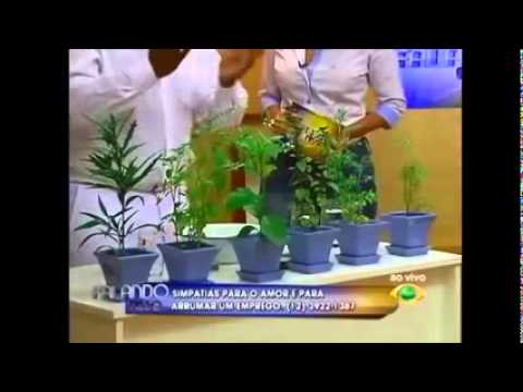 Pai Francisco Borges na Televisão (11) 2854 2271.