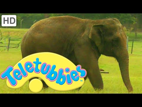 Teletubbies: Washing the Elephant - HD Video