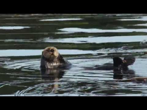 Wildlife of Alaska's Inian Islands