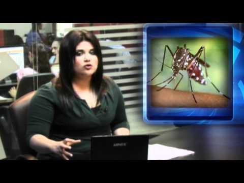 Exportación de ganado encarecerá la carne / Dengue podría salirse de control en Tamaulipas