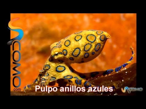 Los 10 animales más venenosos del mundo - The 10 most poisonous animals