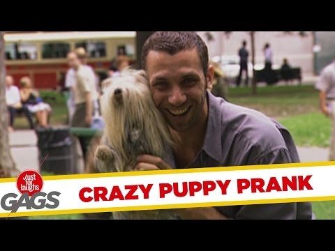 Crazy Puppy Prank