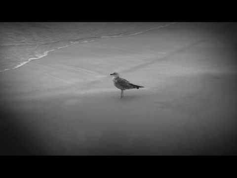 voarte ~ vídeo clip JARDIM DA SEREIA de PEDRO SENA NUNES