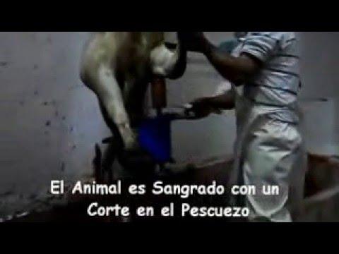 produccion de la carne de ganado bovino