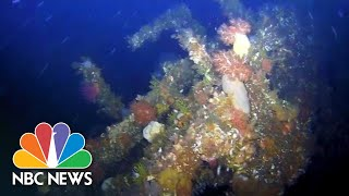 Underwater Drone Shows Wreckage Of WWII Destroyer Off Alaska's Coast | NBC News - NBCNEWS