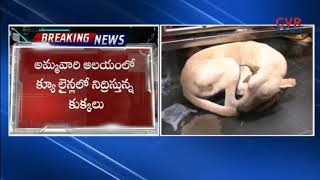 Negligence Of Vijayawada Kanaka Durga Temple Officers | Dogs Hulchal In Q line | CVR NEWS - CVRNEWSOFFICIAL