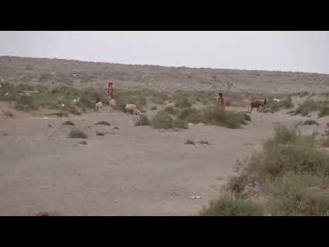إكتشاف وتفكيك حقل ألغام من مخلفات ما زرعته مليشيات الحوثي في مديرية الخوخة