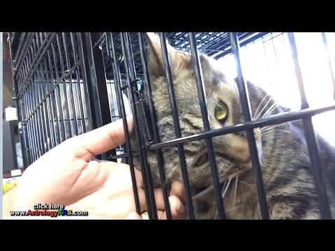 Rahu came to me (I adopted a cat)