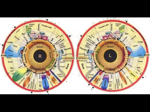 Brief Overview of Iridology