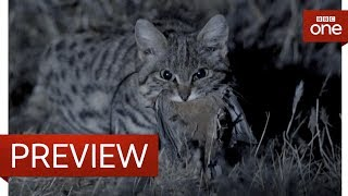 Deadliest cat on Earth - Big Cats: Preview - BBC One - BBC