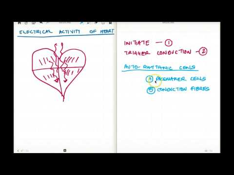 ELECTRICAL ACTIVITY OF HEART 1