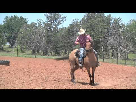#55-Five Star Toot ur Pants - Roan Quarter Horse Filly