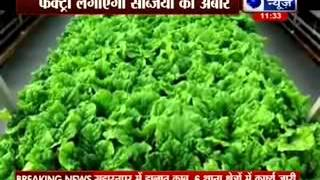 Vegetables to be grown in factory - ITVNEWSINDIA