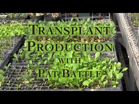 Transplant Production with Pat Battle