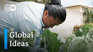 Ecuador: Municipal gardens in Quito help fight hunger | Global Ideas - DEUTSCHEWELLEENGLISH