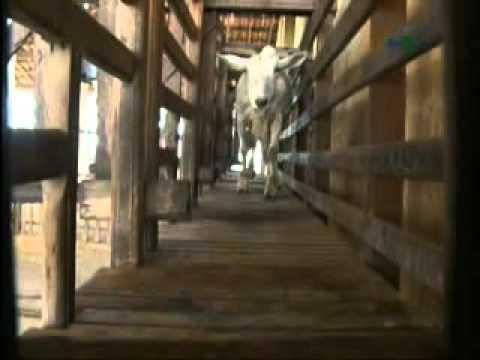 Ordenha manual em cabras - Dia de Campo na TV