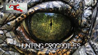 Royalty Free Hunting Crocodiles