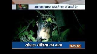 Aaj Ka Viral: Mystery behind the deadly and rare Nipah virus - INDIATV
