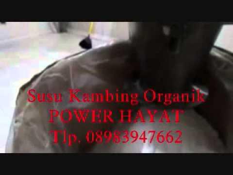 Susu Kambing Etawa Power Hayat 0898 3947 662