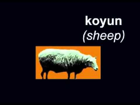 Learn Turkish - words for animals