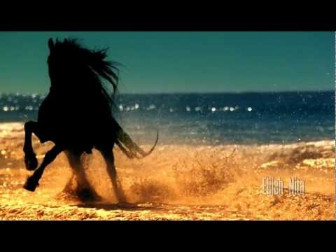 The Magic Of Horses - Die Magie der Pferde HD