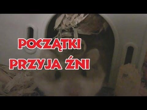 Jeden z filmików Niekrytego Krytyka