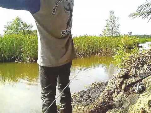 Memancing ikan mujair di empang sungai kelambu - Kalimantan Timur