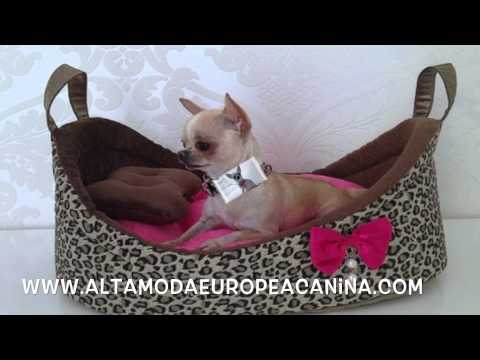 ropa para perros, moda canina