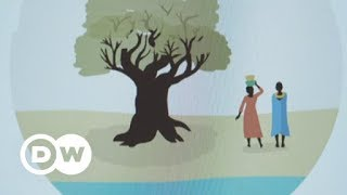 Plant a tree with one click | DW English - DEUTSCHEWELLEENGLISH